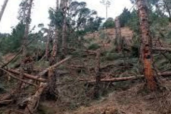 Balakot tree strike shattered myths about Indian armed forces : Report