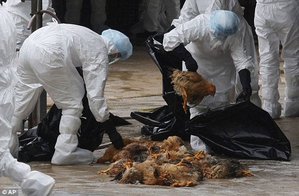 Hong Kong to slaughter 15,000 chickens after outbreak