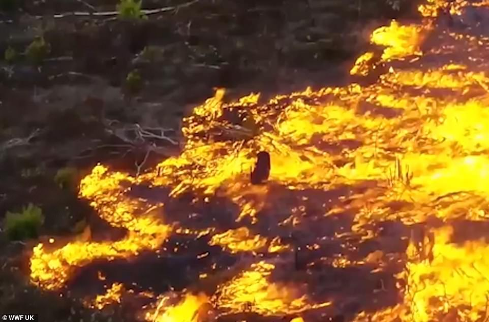 Fires in Amazon rainforest rage at record rate