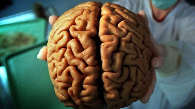 Bigger brain could make you only a little smarter than others