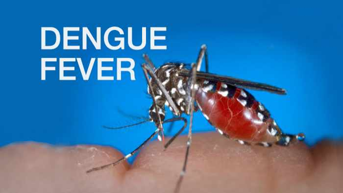 47 dead, over 200,000 infected with dengue this year in Sri Lanka