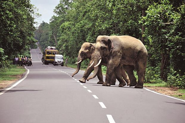 The elephant in the room: Chasing away elephants more important than welcoming Rahul: Wayanad tribals