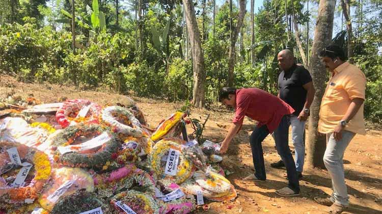 More stars take up 'My Tree Challenge'