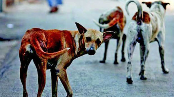 SC refuses to stay killing of stray dogs in Kerala