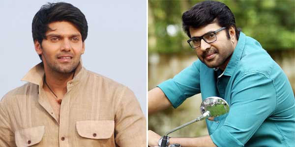 Arya to play baddie in Mammootty starrer film The Great Father