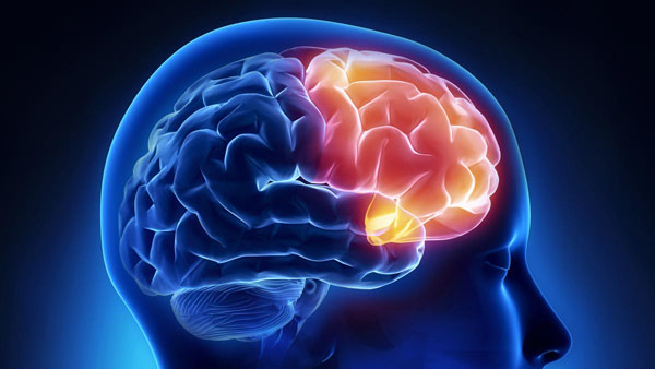 Decoded: Which brain region helps us stay conscious?