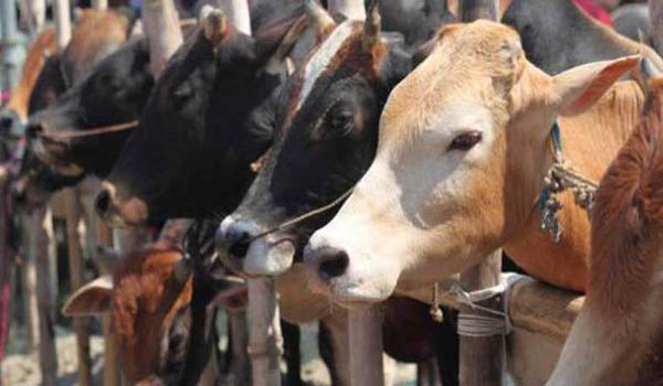 Hindutva leader Ekbote beaten up by cow vigilantes in Maharashtra