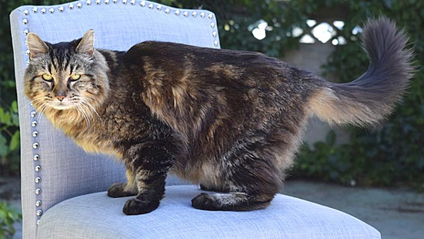 At 26 years 13 days, Corduroy is worlds oldest cat