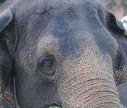 Rights group blames poor upkeep for elephants turning restless