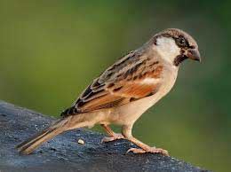 Awareness campaign launched to save house sparrows