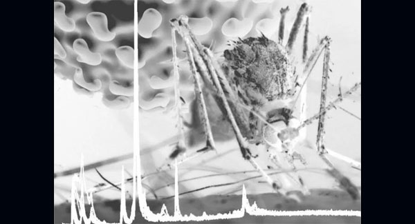Mosquito gut may hold key to preventing dengue, Zika