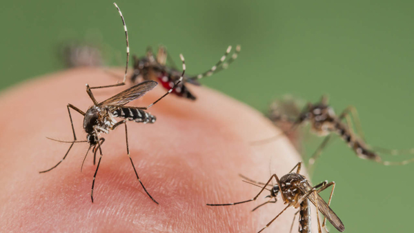 Help NASA track mosquitoes, reduce disease outbreaks