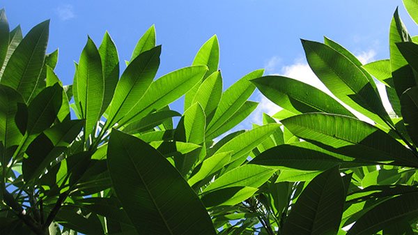 Land plants arose 100 million years earlier than thought