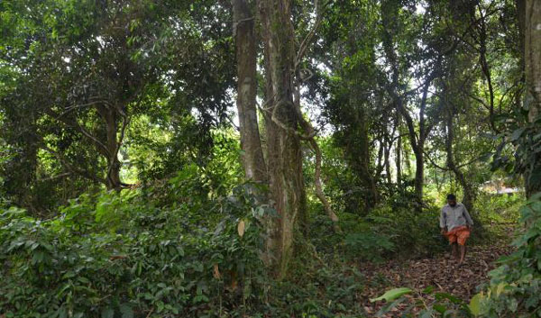 Sacred groves in state under threat: Report