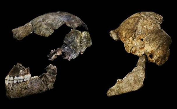 New ancient human species discovered in South Africa