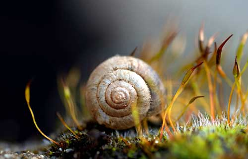 Snails offer wealth of information on past weather