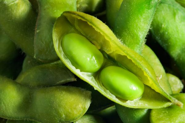Eating soybeans can prevent cancer growth: study