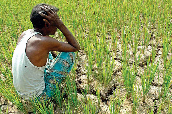 Maharashtra farmers suicides doubled under Fadnavis government: RTI reply