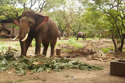 Over 100 elephant deaths in State in last nine months