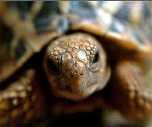 Over 100 wild tortoises seized from woman passengers