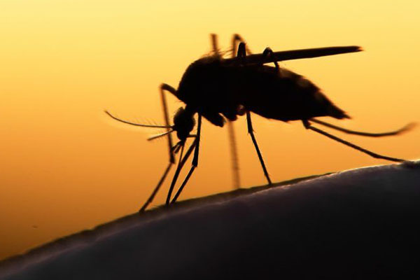 Six-year-old West Nile Virus patient dead